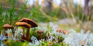 sieniä 1